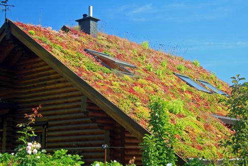 Afbeeldingsresultaat voor schuin dak sedum shutterstock